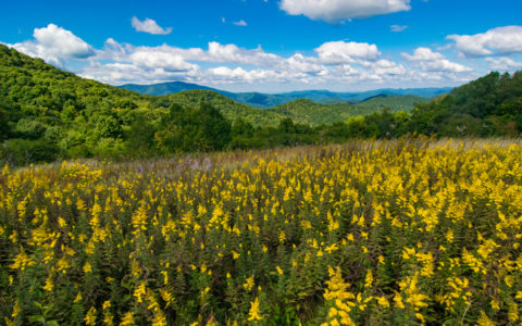 Springtime Flowers in the Smoky Mountains